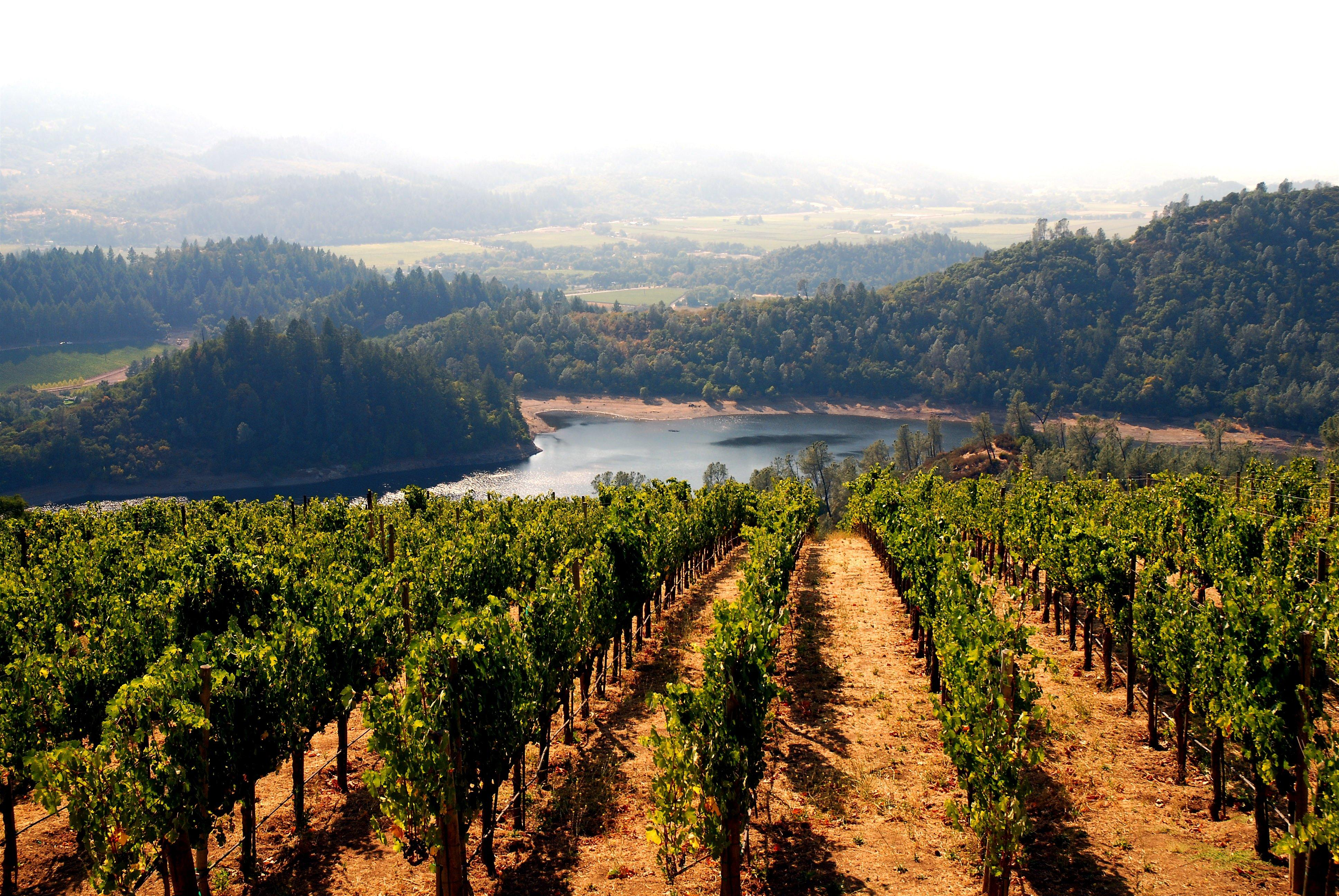 California golden state is home to many food trends for California wine