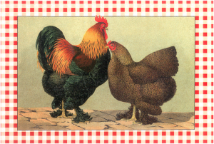 "Antique print from ""The Artful Chicken"" by Linda Arnaud (Stewart, Tabori and Chang)"