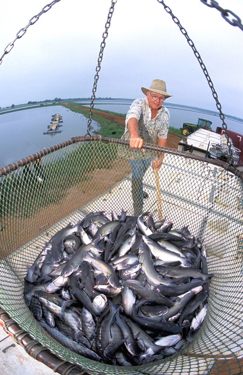 Mississippi Gulf Staters enjoy catch of the sea