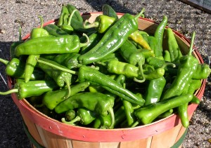 Bushels of chiles are the first sign of fall in New Mexico./Bonny Wolf